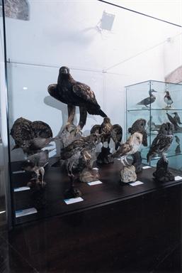 """Museo Civico Statale """"Brancaleoni"""""""